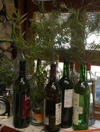 rosemary cuttings in bottles